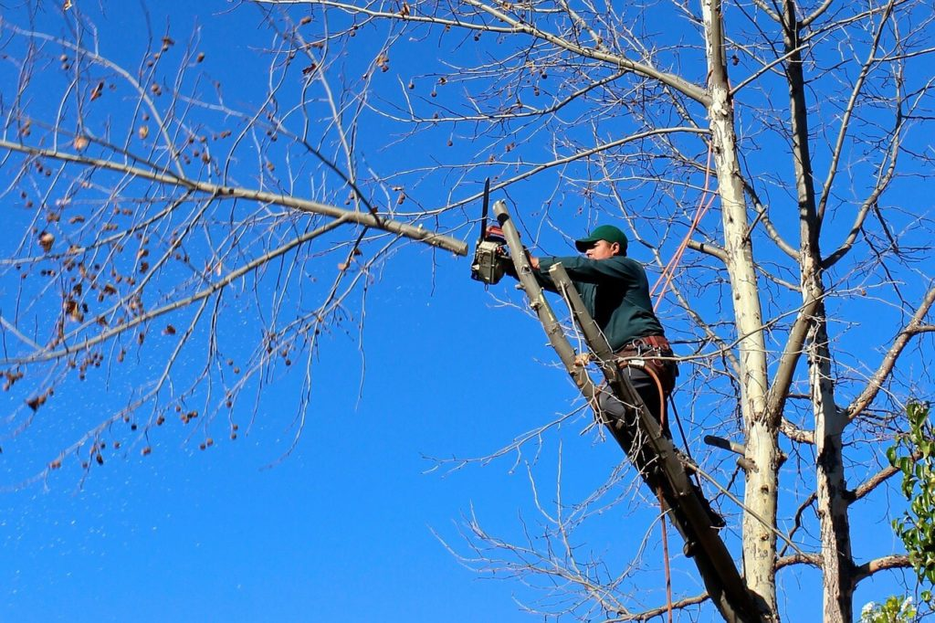 Contact Us-Key Biscayne FL Tree Trimming and Stump Grinding Services-We Offer Tree Trimming Services, Tree Removal, Tree Pruning, Tree Cutting, Residential and Commercial Tree Trimming Services, Storm Damage, Emergency Tree Removal, Land Clearing, Tree Companies, Tree Care Service, Stump Grinding, and we're the Best Tree Trimming Company Near You Guaranteed!