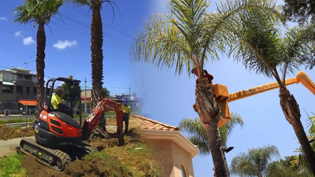 Palm tree trimming & palm tree removal-Key Biscayne FL Tree Trimming and Stump Grinding Services-We Offer Tree Trimming Services, Tree Removal, Tree Pruning, Tree Cutting, Residential and Commercial Tree Trimming Services, Storm Damage, Emergency Tree Removal, Land Clearing, Tree Companies, Tree Care Service, Stump Grinding, and we're the Best Tree Trimming Company Near You Guaranteed!