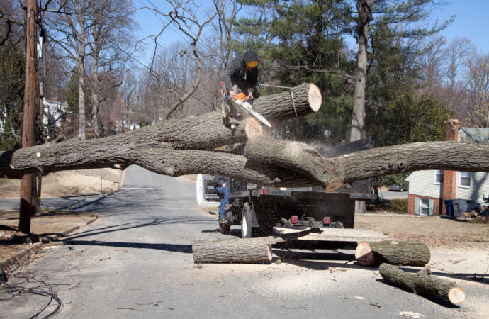 Residential Tree Services-Key Biscayne FL Tree Trimming and Stump Grinding Services-We Offer Tree Trimming Services, Tree Removal, Tree Pruning, Tree Cutting, Residential and Commercial Tree Trimming Services, Storm Damage, Emergency Tree Removal, Land Clearing, Tree Companies, Tree Care Service, Stump Grinding, and we're the Best Tree Trimming Company Near You Guaranteed!