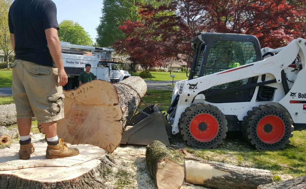 Services-Key Biscayne FL Tree Trimming and Stump Grinding Services-We Offer Tree Trimming Services, Tree Removal, Tree Pruning, Tree Cutting, Residential and Commercial Tree Trimming Services, Storm Damage, Emergency Tree Removal, Land Clearing, Tree Companies, Tree Care Service, Stump Grinding, and we're the Best Tree Trimming Company Near You Guaranteed!