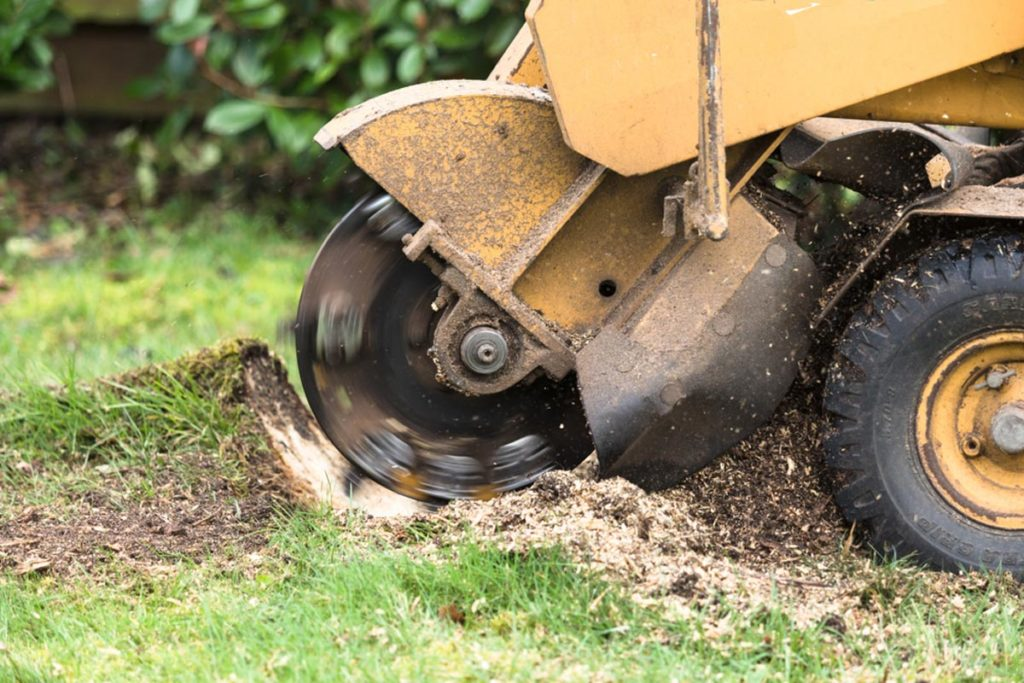 Stump Grinding-Key Biscayne FL Tree Trimming and Stump Grinding Services-We Offer Tree Trimming Services, Tree Removal, Tree Pruning, Tree Cutting, Residential and Commercial Tree Trimming Services, Storm Damage, Emergency Tree Removal, Land Clearing, Tree Companies, Tree Care Service, Stump Grinding, and we're the Best Tree Trimming Company Near You Guaranteed!