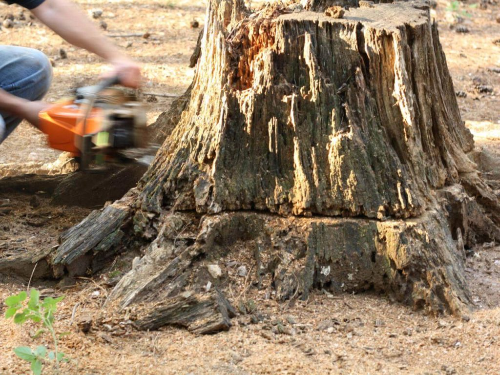 Stump Removal-Key Biscayne FL Tree Trimming and Stump Grinding Services-We Offer Tree Trimming Services, Tree Removal, Tree Pruning, Tree Cutting, Residential and Commercial Tree Trimming Services, Storm Damage, Emergency Tree Removal, Land Clearing, Tree Companies, Tree Care Service, Stump Grinding, and we're the Best Tree Trimming Company Near You Guaranteed!