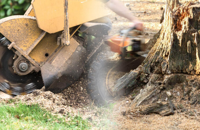 Stump grinding & removal-Key Biscayne FL Tree Trimming and Stump Grinding Services-We Offer Tree Trimming Services, Tree Removal, Tree Pruning, Tree Cutting, Residential and Commercial Tree Trimming Services, Storm Damage, Emergency Tree Removal, Land Clearing, Tree Companies, Tree Care Service, Stump Grinding, and we're the Best Tree Trimming Company Near You Guaranteed!