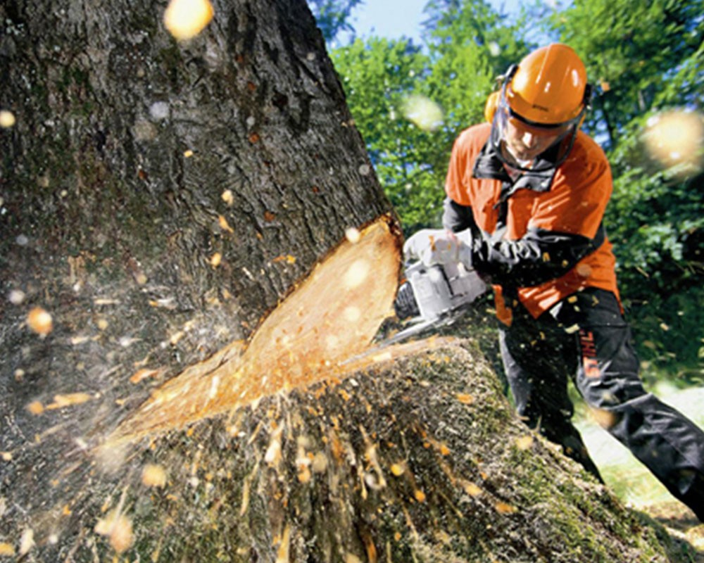 Tree Cutting-Key Biscayne FL Tree Trimming and Stump Grinding Services-We Offer Tree Trimming Services, Tree Removal, Tree Pruning, Tree Cutting, Residential and Commercial Tree Trimming Services, Storm Damage, Emergency Tree Removal, Land Clearing, Tree Companies, Tree Care Service, Stump Grinding, and we're the Best Tree Trimming Company Near You Guaranteed!